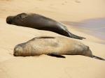 Monk Seal 6