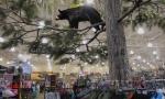 Bear Denied Life