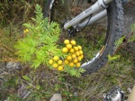 Flowers & Bike –IMG_0519