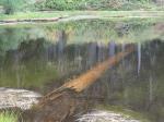 Submerged Tree at Damfino Lake #2 –IMG_0555