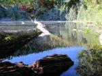 Cedar Lake –IMG_0658