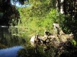 Cedar Lake –IMG_0660