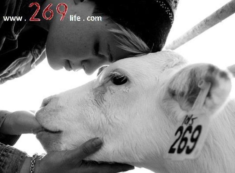 269 Tattoo » Calf 269