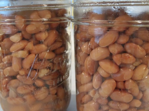 Pinto Beans - IMG_1954