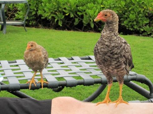 Kauai - May 8, 2011