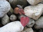 Heart Leaf –IMG_5820