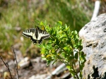 Butterfly at Bootjack Mountain –100_2761