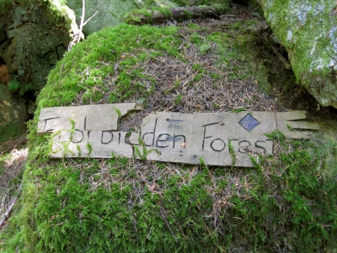 Forbidden Forest - IMG_2526