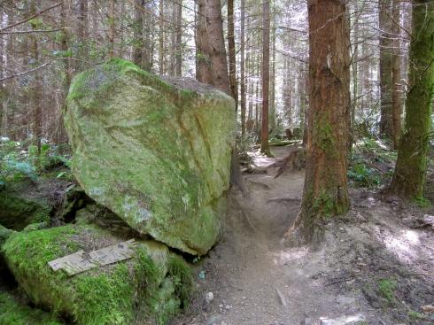 Forbidden Forest - IMG_2527