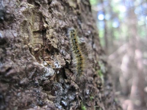 Caterpillar - IMG_2529