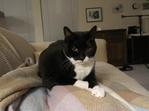 Millie - November 29, 2011