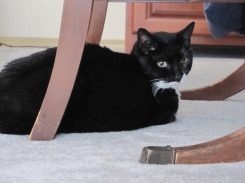 Millie - July 29, 2012