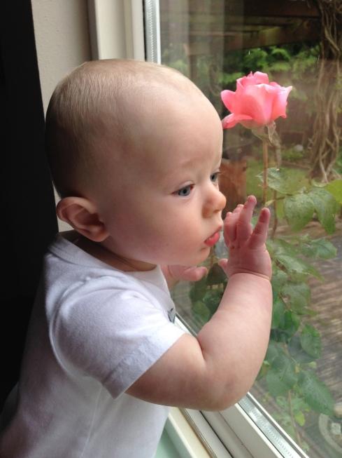 Looking outside my bedroom window - May 5, 2015