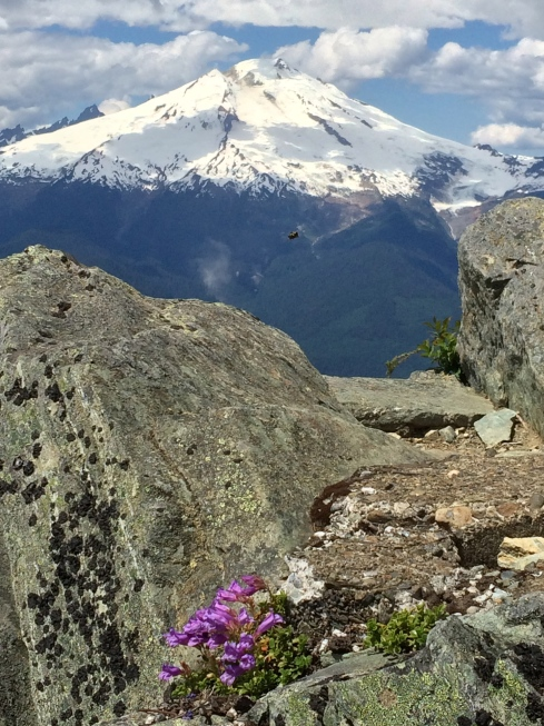 Mt Baker from Anderson Butte