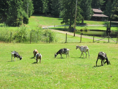 Part of the permanent herd at NMF - August 10, 2012