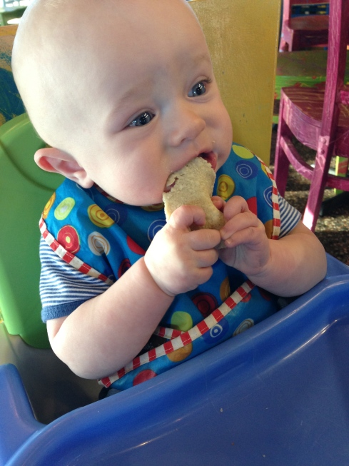 Munching on a corn tortilla - 6.5 months old - March 7, 2015