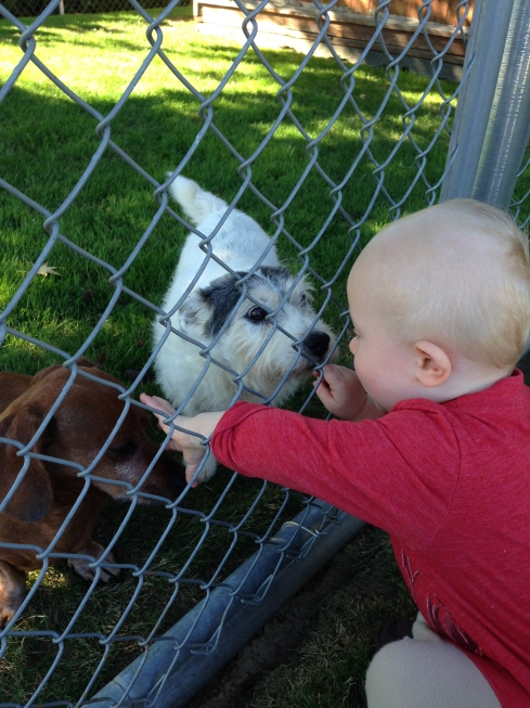 Petting the neighbor's dogs - September 9, 2015