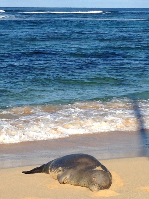 Monk seal - May 30, 2016
