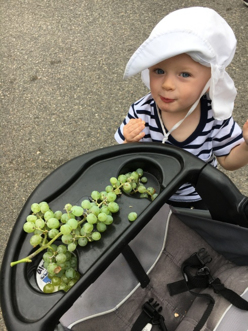 Eating grapes on the canal trail - August 27, 2016